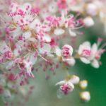 Florale un parcours botanique autour du cercle chromatique
