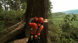 Rainforest  Réalisé par Richard Boyce | Québec, 2011, 65 min, V.O. anglaise.