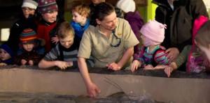 Le pavillon Odyssée Pacifique Sud, dernière nouveauté au Zoo de Granby, a également attiré bon nombre de visiteurs hier. Ici, Diane Leclerc, gardienne d'animaux, explique à une jeune fille comment nourrir les raies.