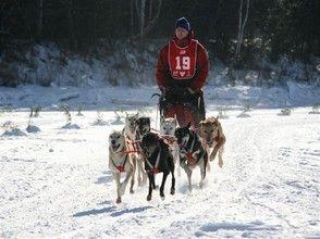 Course Internationale de chiens à traîneaux