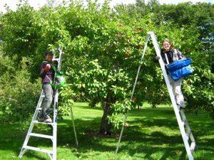 Les horticultrices de la Commission de la capitale nationale du Québec. Crédit photo : ©CCNQ, Jennifer Dion
