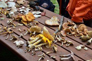 Magasin champignons © photo: courtoisie