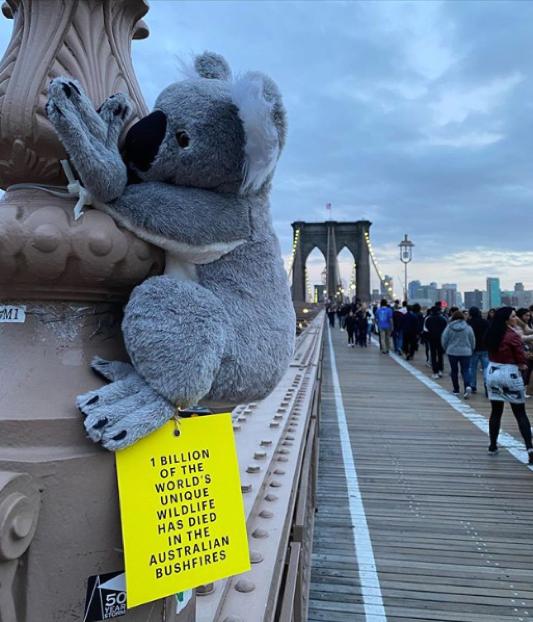 New York : des koalas en peluche un peu partout dans la ville pour collecter des dons