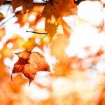 activités à faire au québec cet automne